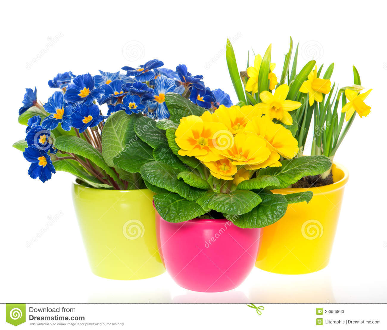 Spring Flowers In Colorful Pots White Stock Image