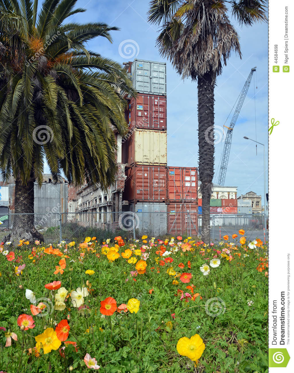 Spring Flowers In Deserted Christchurch City Cbd Editorial Stock