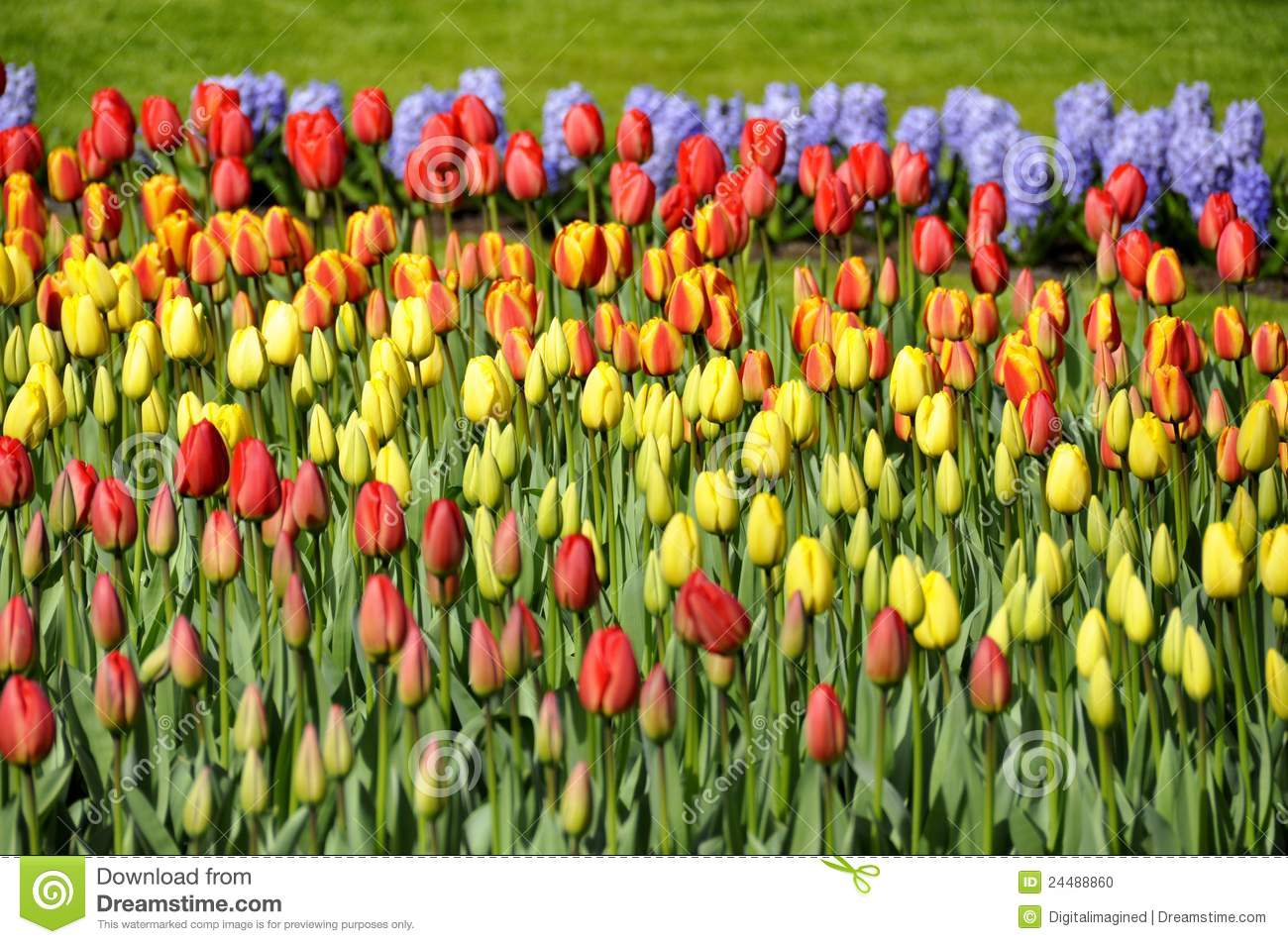 Spring flowers in different colors stock photo image for What makes flowers different colors