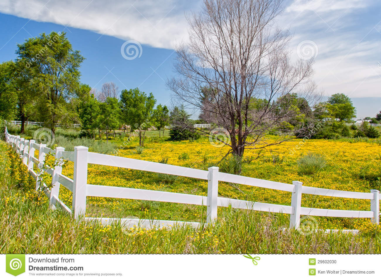 Spring Flowers in Fence Lined Pasture in Midwest Prairie