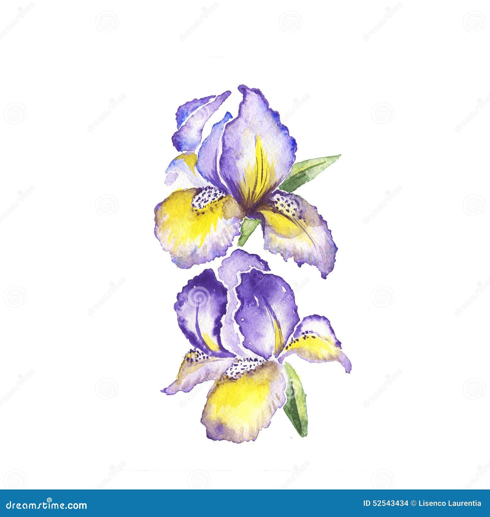 The spring flowers fleur de lis painting watercolor stock for Spring flowers watercolor