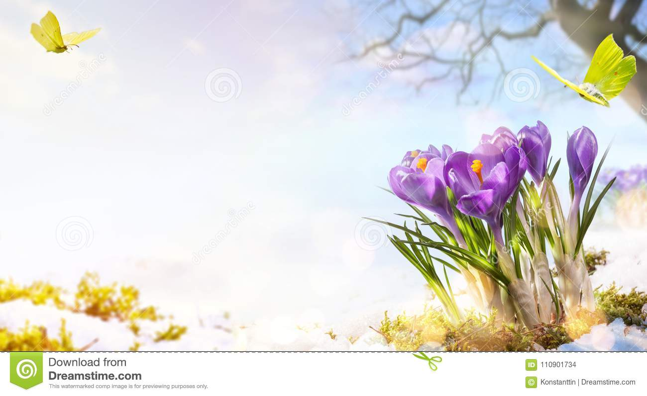 Spring Flowers And Flight Butterfly On Spring Meadow Background