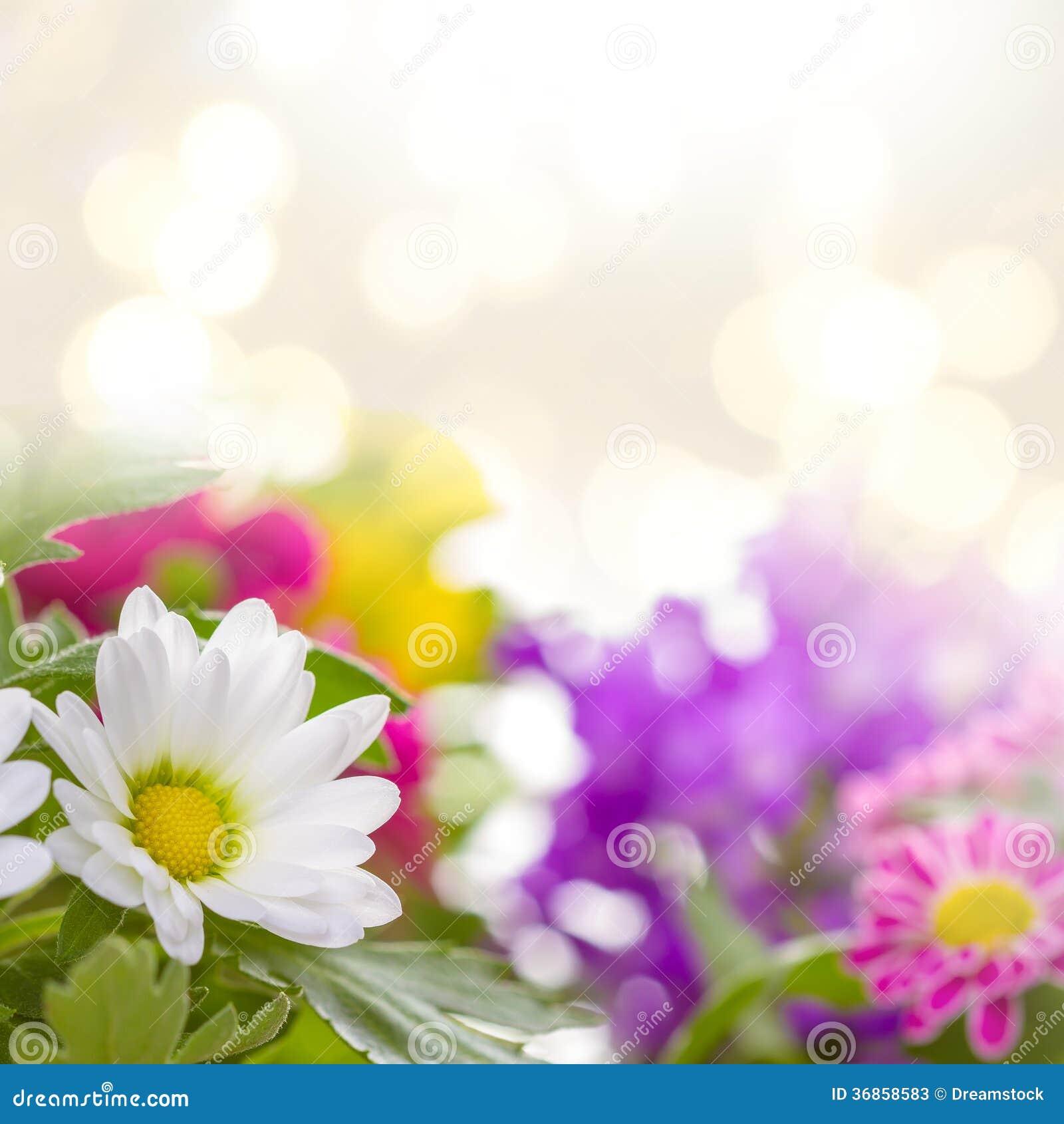 spring flowers stock illustration image of illustration