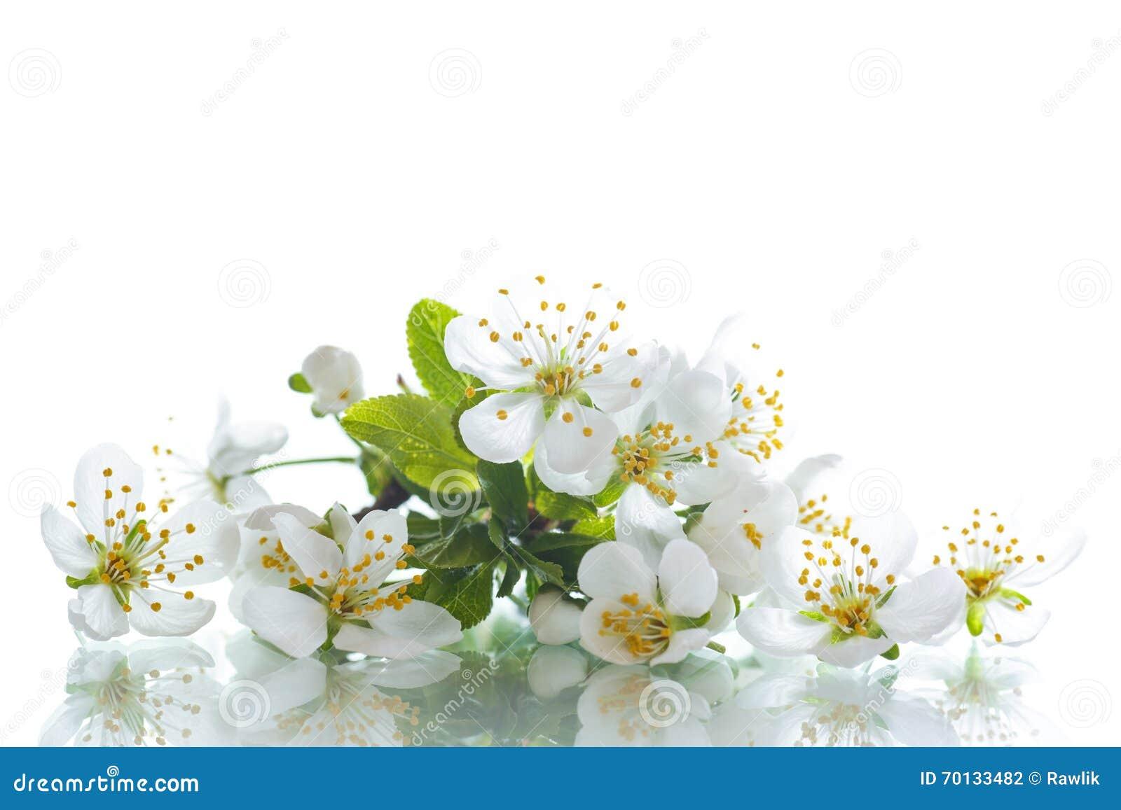 Spring Flowers Fruit Trees Stock Image