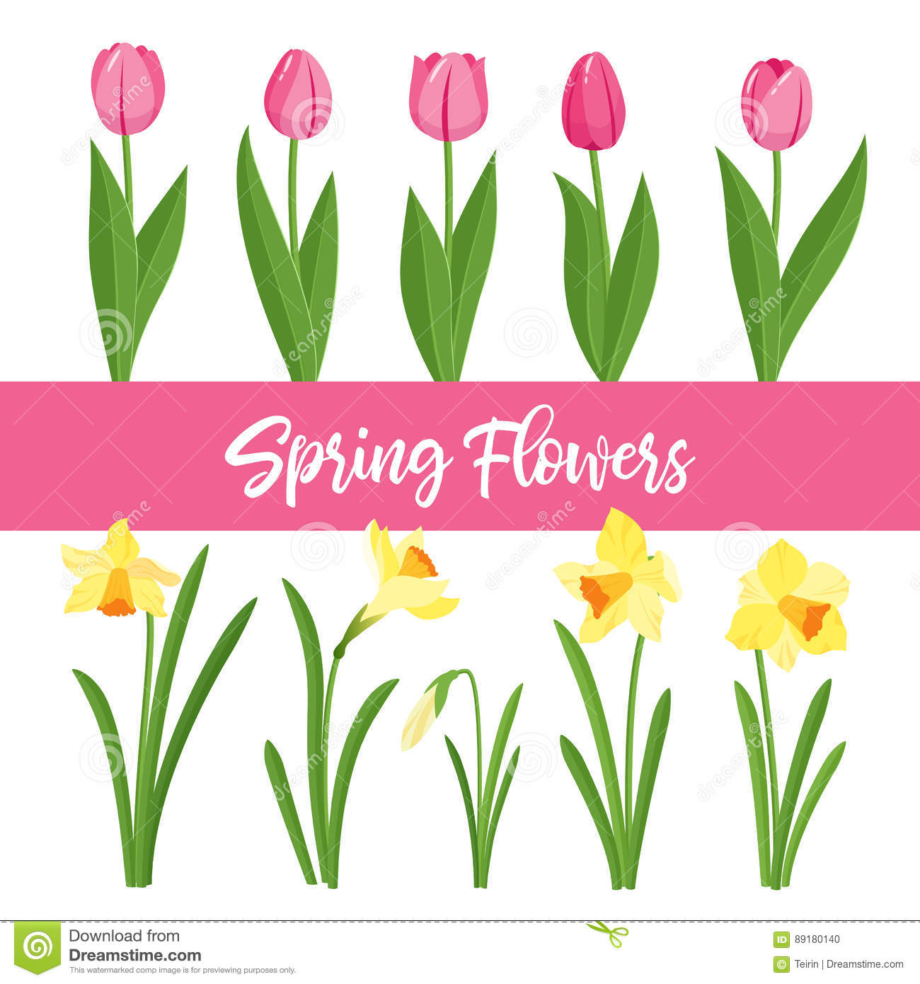 Spring Flowers Growing In The Garden Tulips And Daffodils Isolated