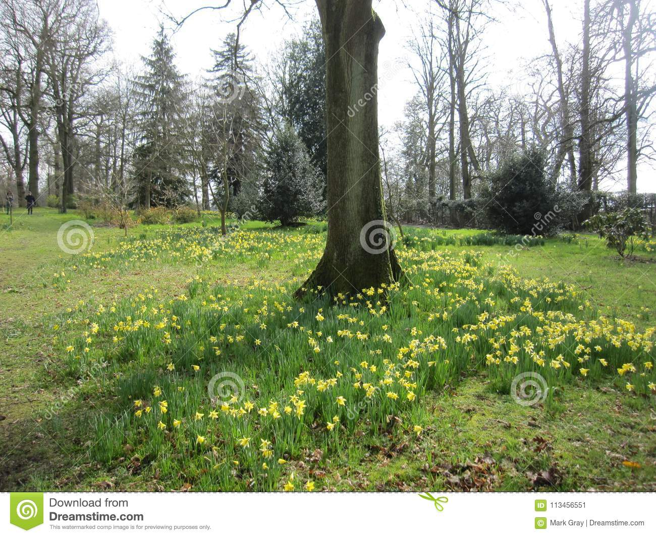 Springtime in england stock image image of tree flowers 113456551 download springtime in england stock image image of tree flowers 113456551 mightylinksfo