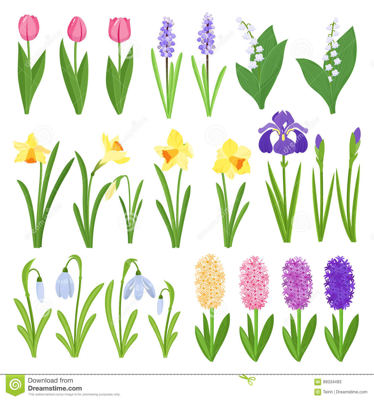 Garden Design Graphics spring flowers. irises, lilies of valley, tulips, narcissuses