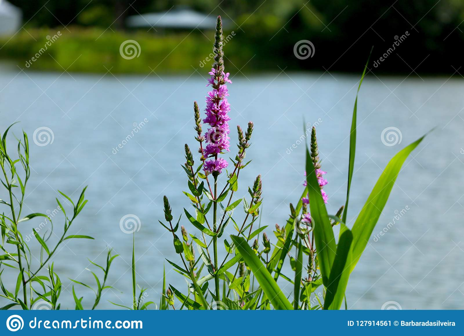 Spring flowers on the lake