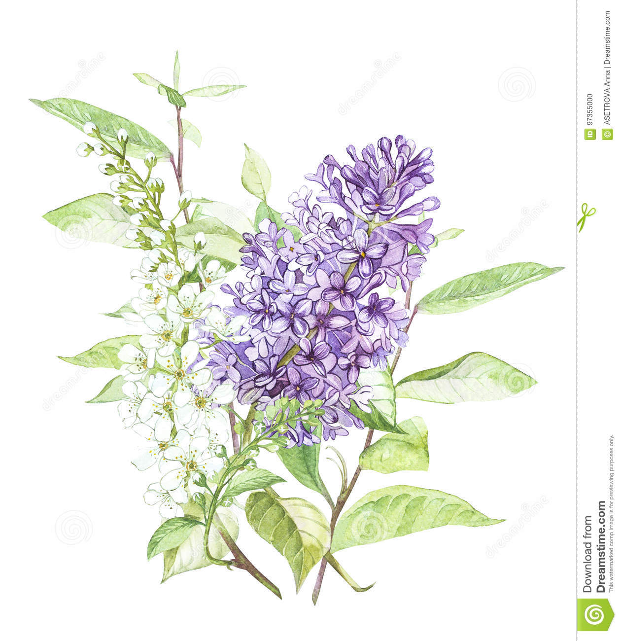 Spring flowers lilac and Bird-cherry tree isolated on white background. Watercolor hand drawn illustration.