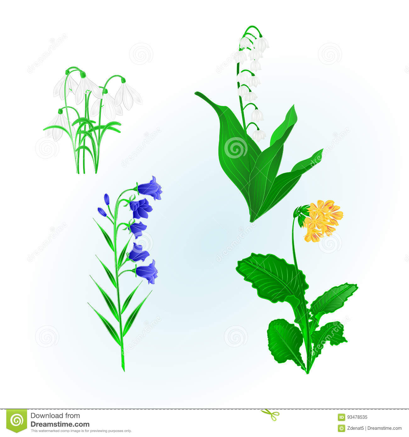 Spring Flowers Lily Of The Valley Snowdropsbluebell Campanula And