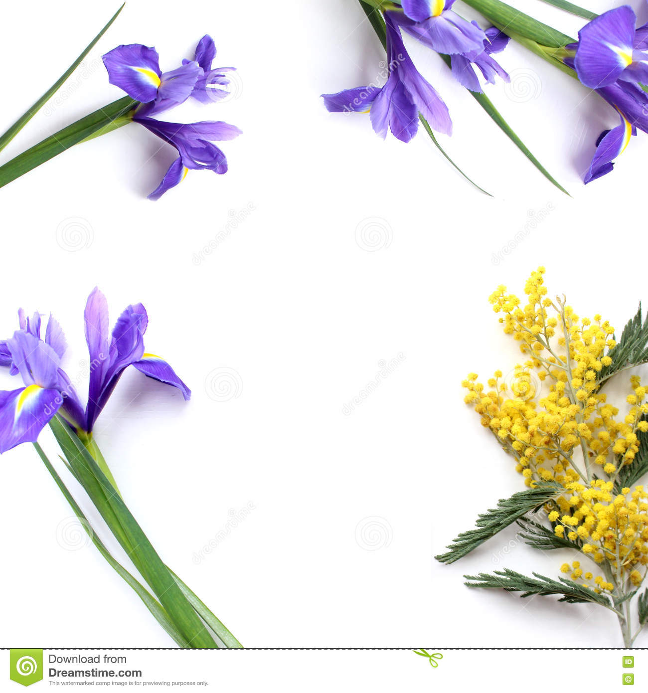 Spring Flowers Mimosa And Iris Product Mockup Stock Image Image