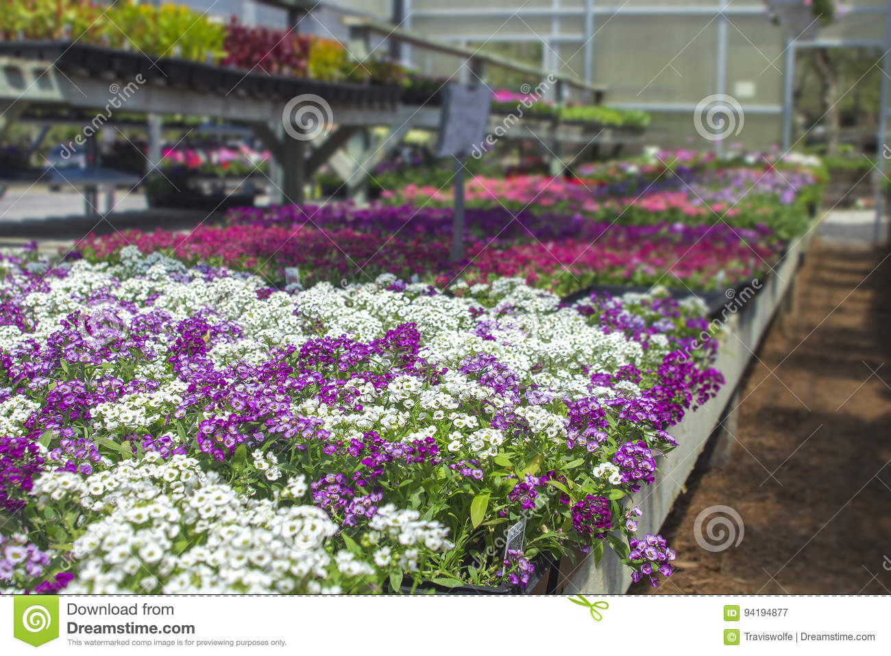 Spring Flowers Open Air Freshly Organized With Organic Growing In