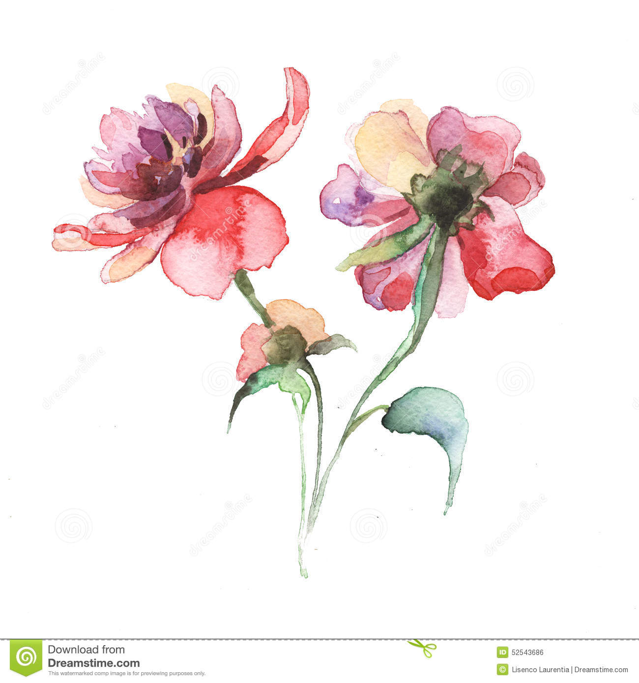 The spring flowers peony painting watercolor stock for Spring flowers watercolor