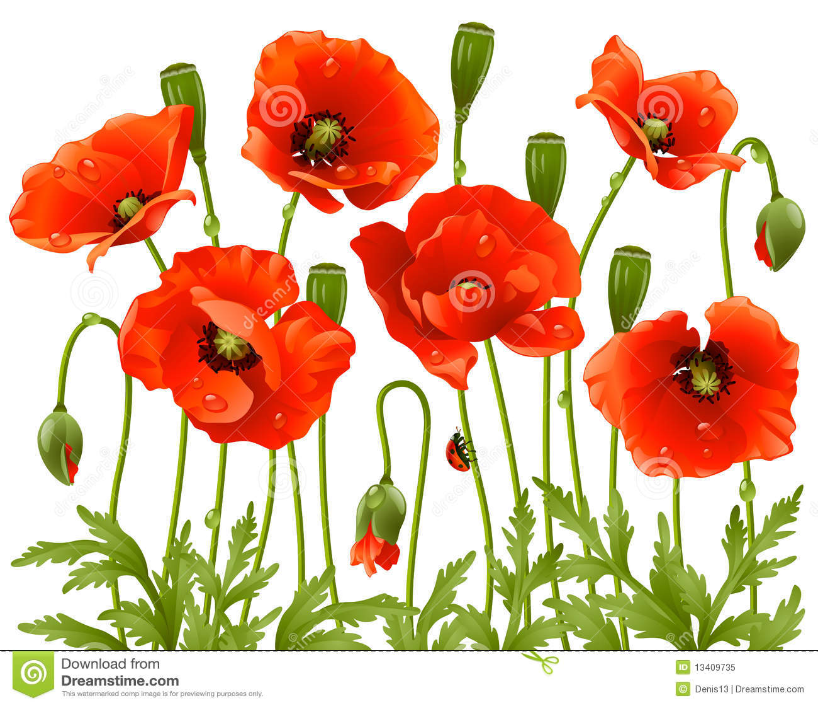 Spring flowers poppy royalty free stock photo image for Decoraciones para hojas