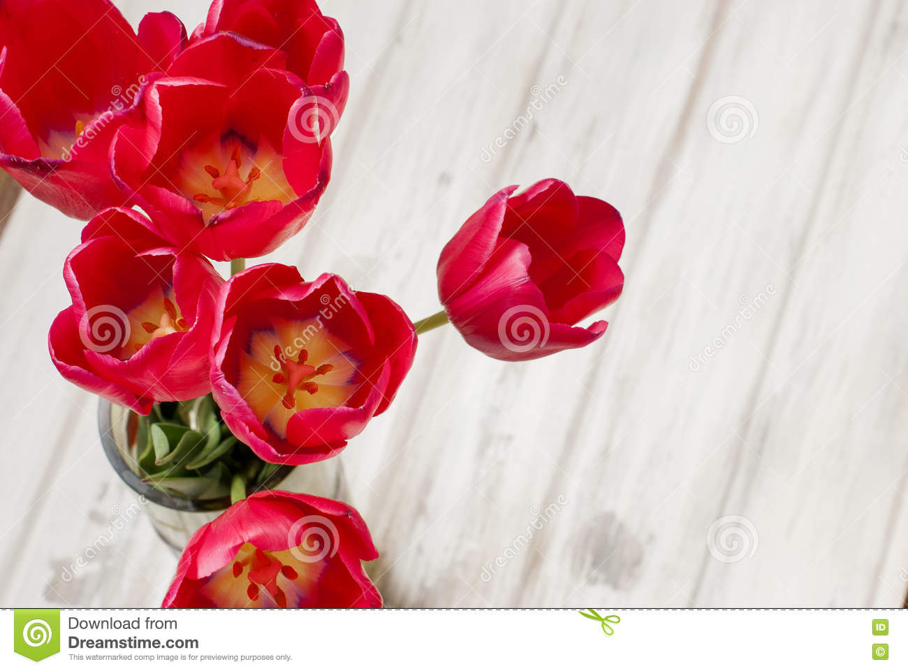 Spring flowers red tulips ina vase