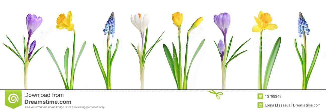 Spring Flowers In A Row Royalty Free Stock Images - Image: 13799349