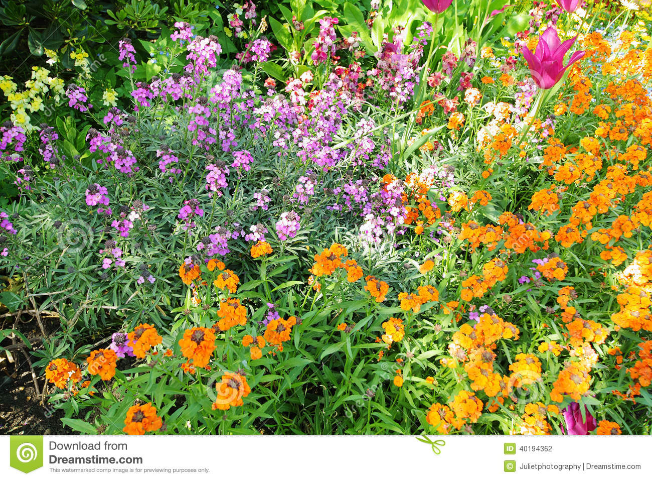 Spring Flowers In St James Park London Stock Photo Image Of