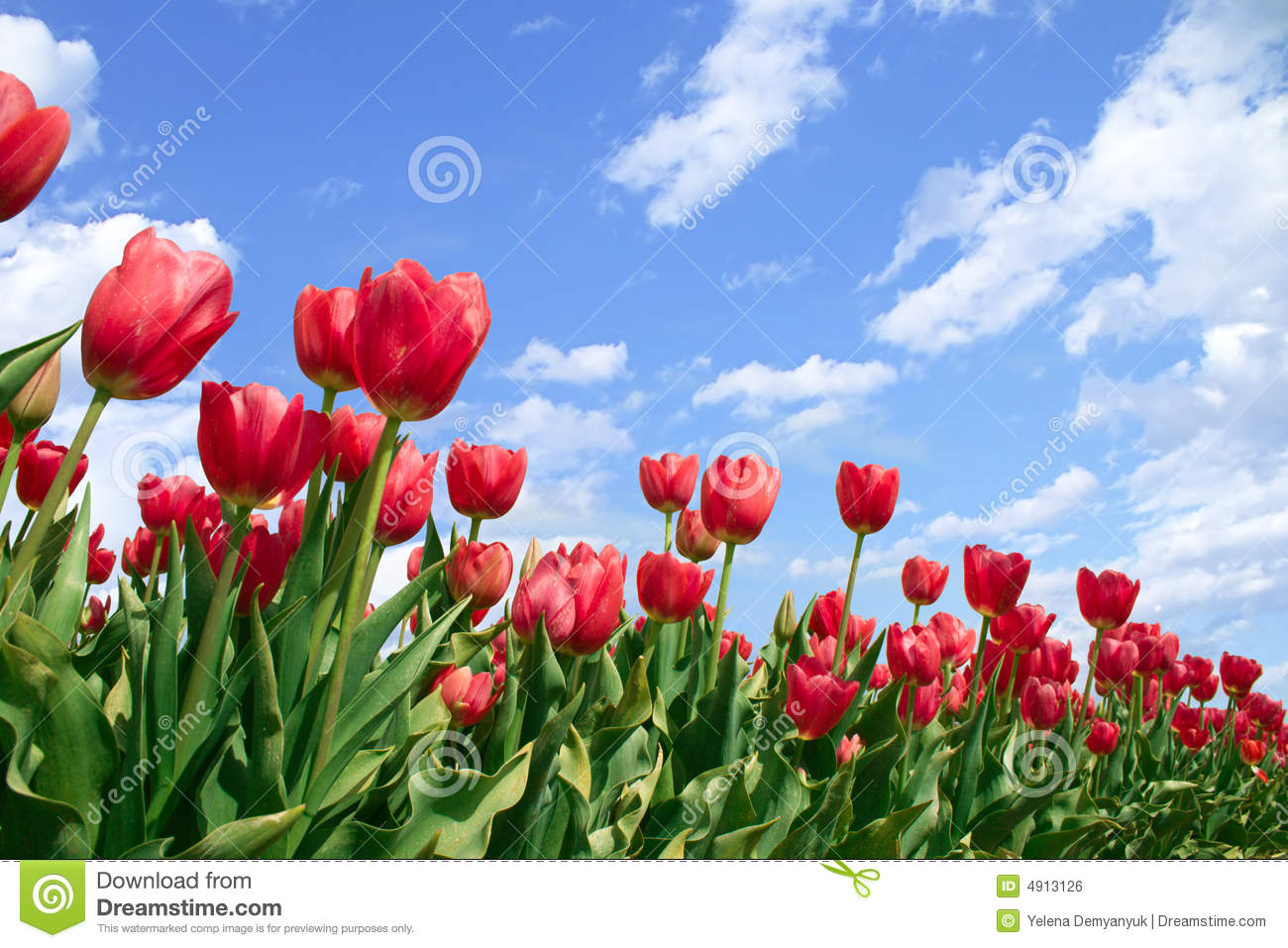 Spring Flowers Tulips In Blue Sky Royalty Free Stock Image - Image ...