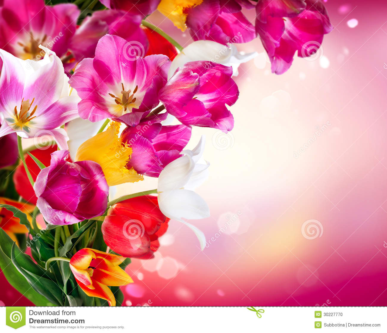 Spring Tulips Stock Photo - Image: 30227770