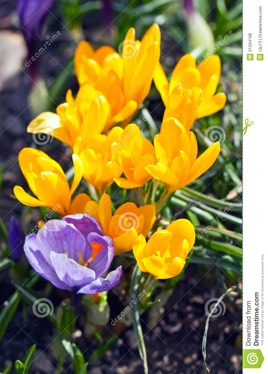 Spring Flowers Vertical Picture Royalty Free Stock Photos
