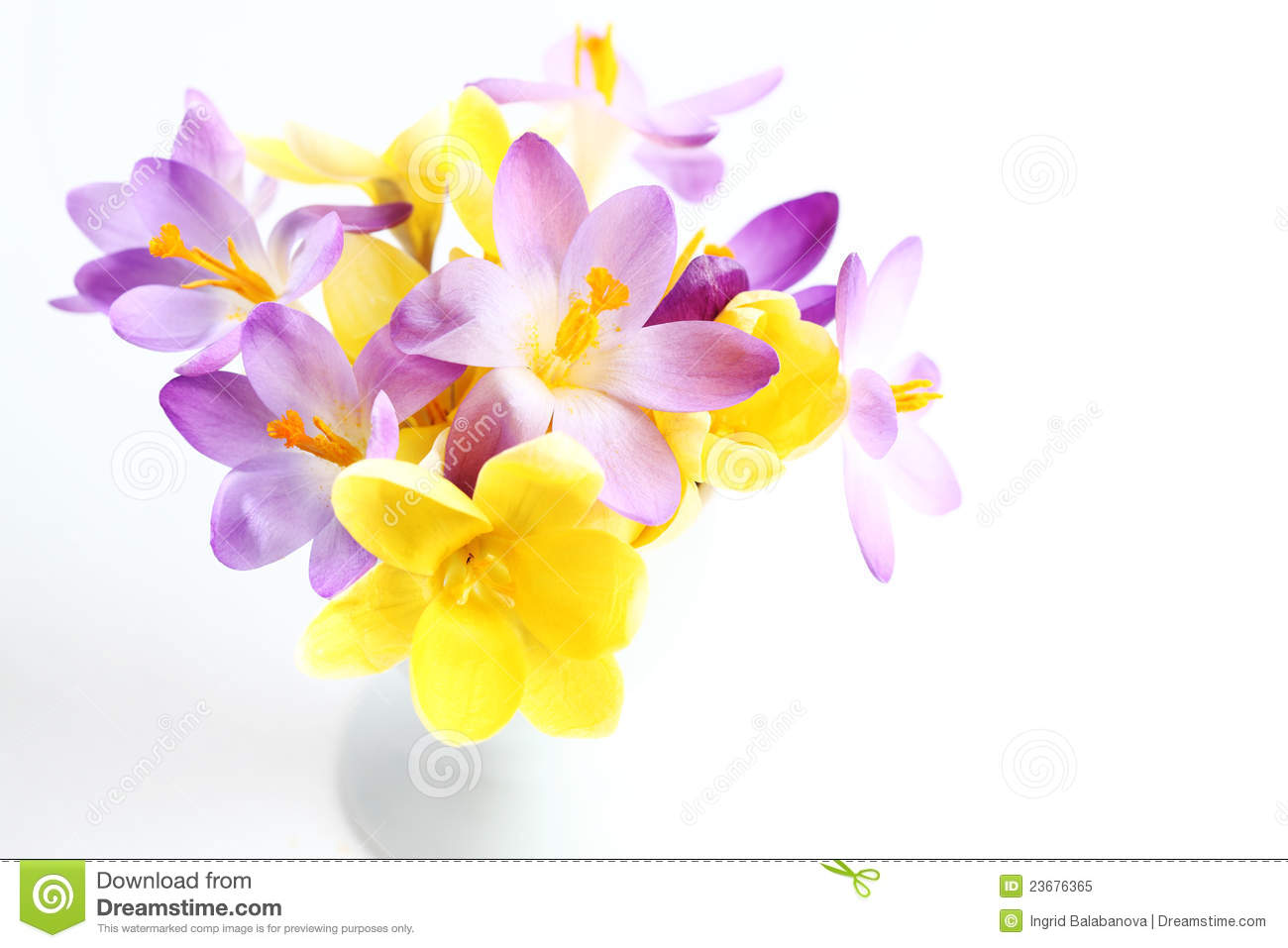 Spring Flowers On White Background Stock Image Image Of Life