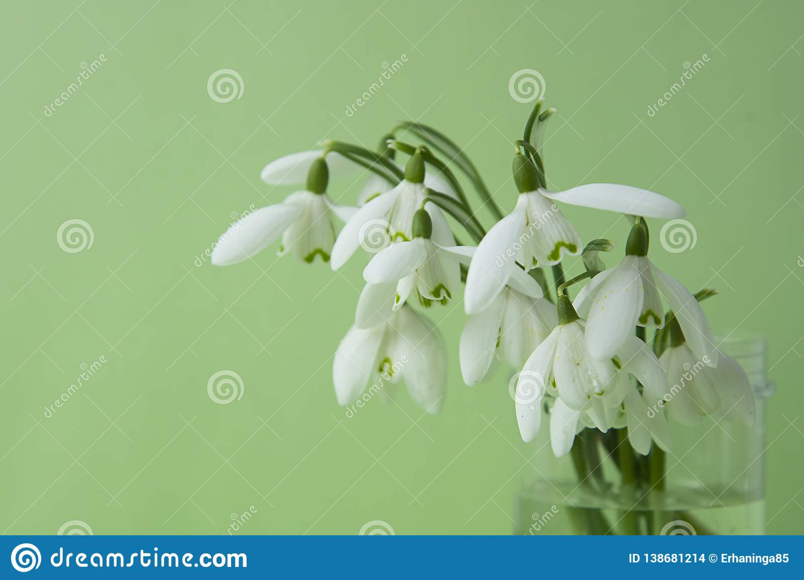 Spring flowers, white snowdrops over green background. Abstract background for greeting cards. Isolated