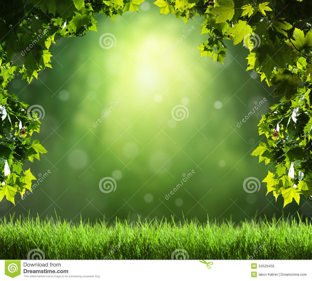 spring forest background royalty free stock photos image