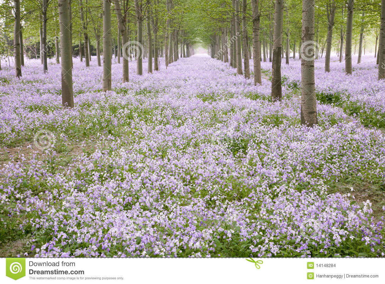 Spring Forest With Flowers Stock Photo Image Of Landscape 14148284