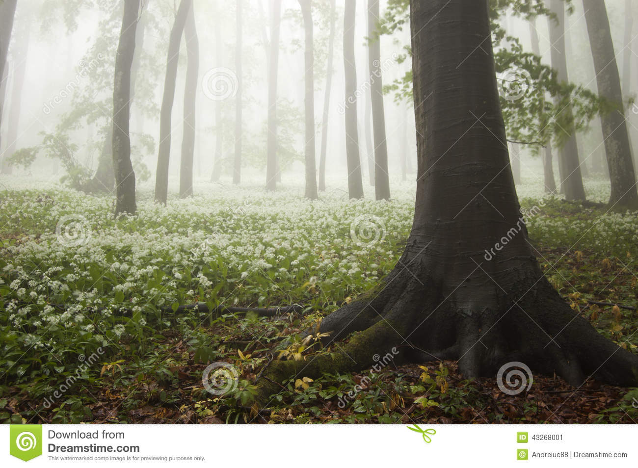 Spring in the forest with flowers in bloom and fog