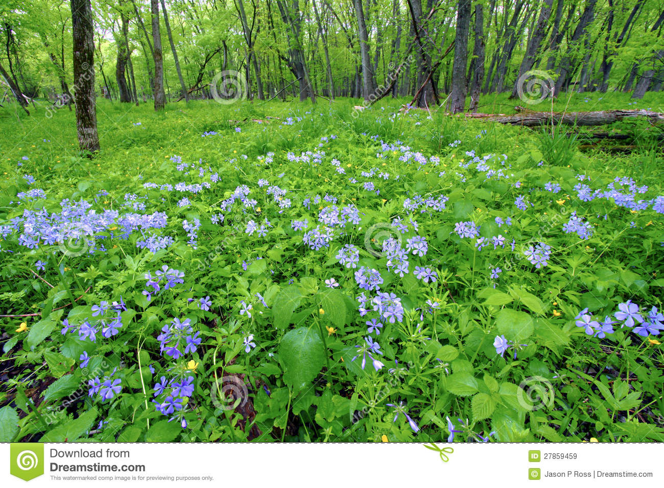 Spring Forest Scenery Illinois Royalty Free Stock Images - Image ...