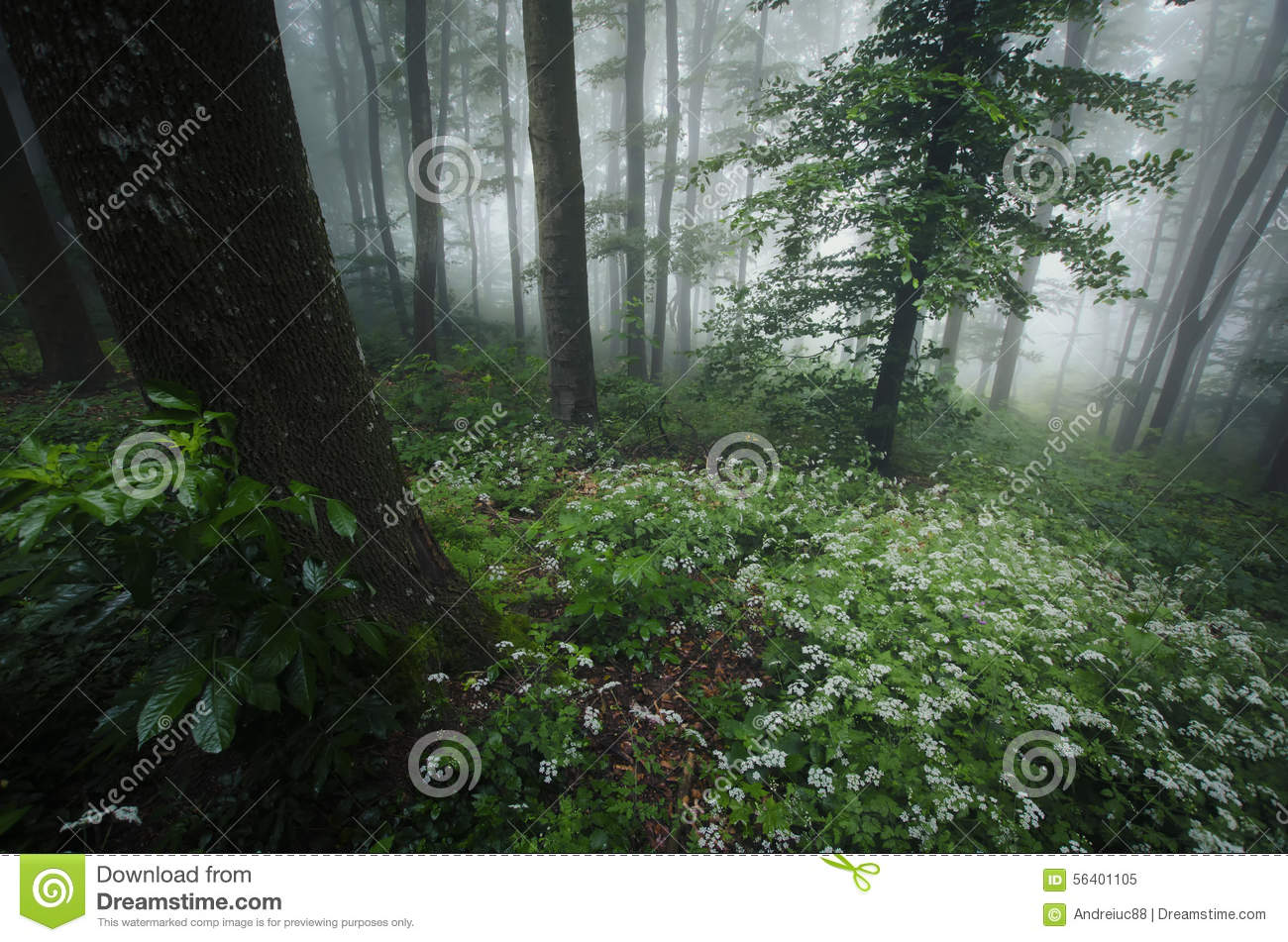 Spring in the forest with white flowers and fog