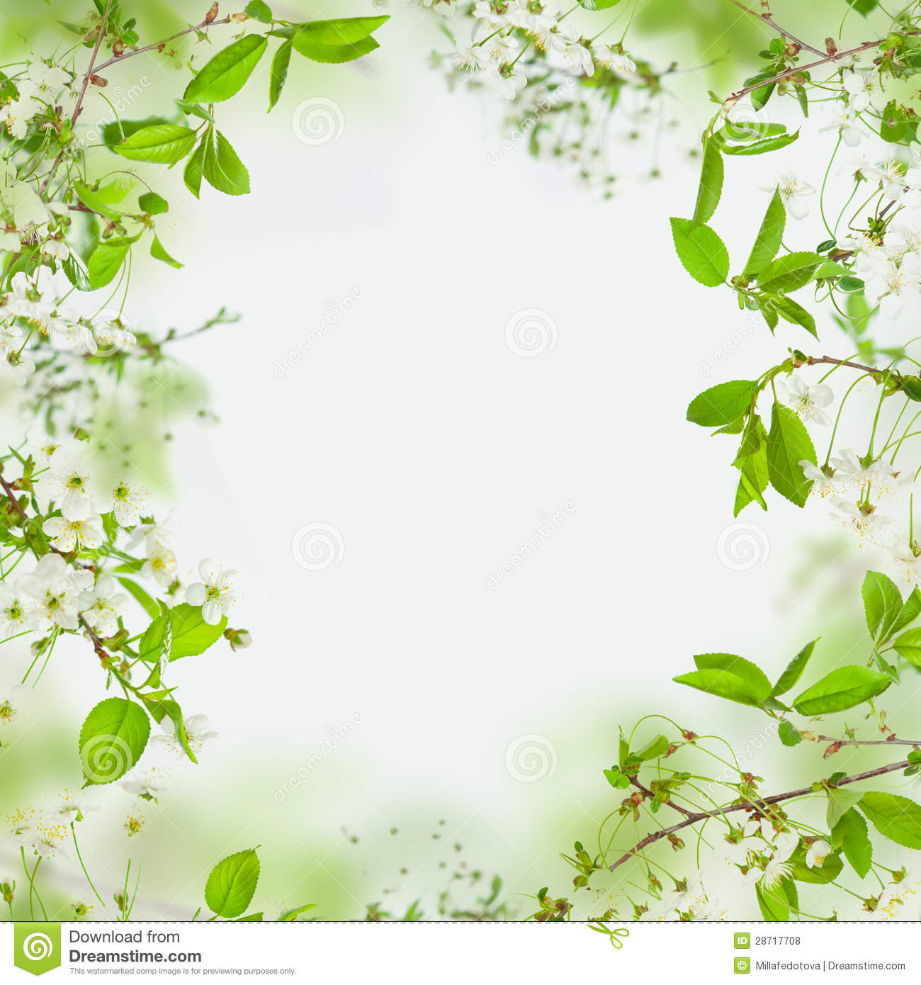 Spring Green Leaves And Flowers Background With Plants: Spring Frame Of Flowers And Green Leaves Stock Photo