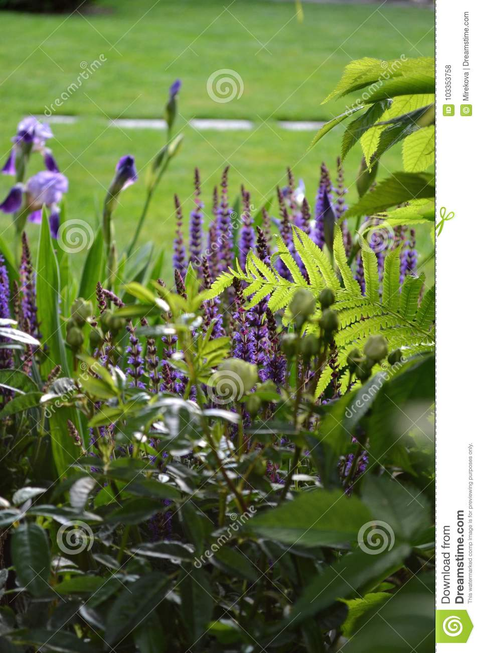 Spring Fresh Flowering Garden With Perennials Stock Photo Image Of