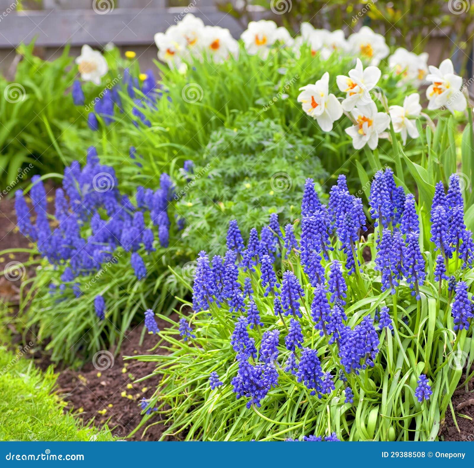 Exceptionnel Spring Garden Flowers