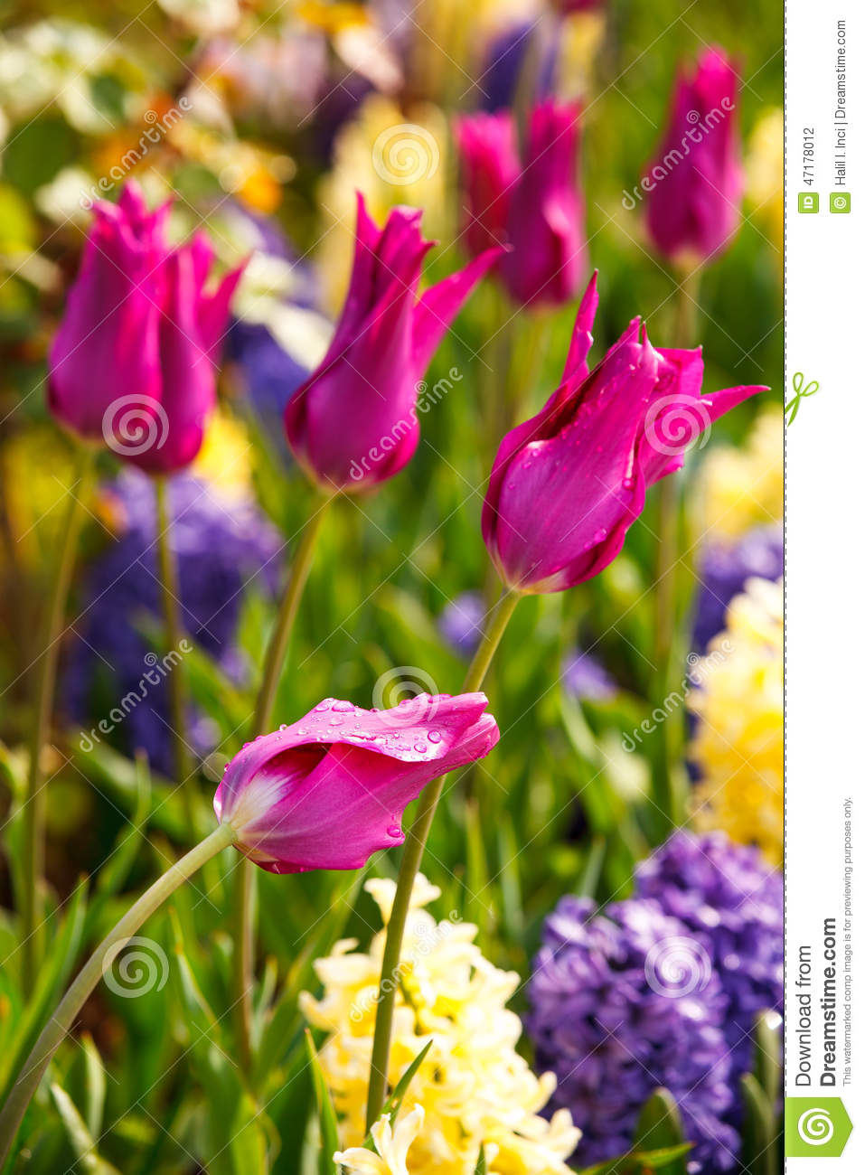 Garden Flowers spring garden flowers stock photo - image: 47178012