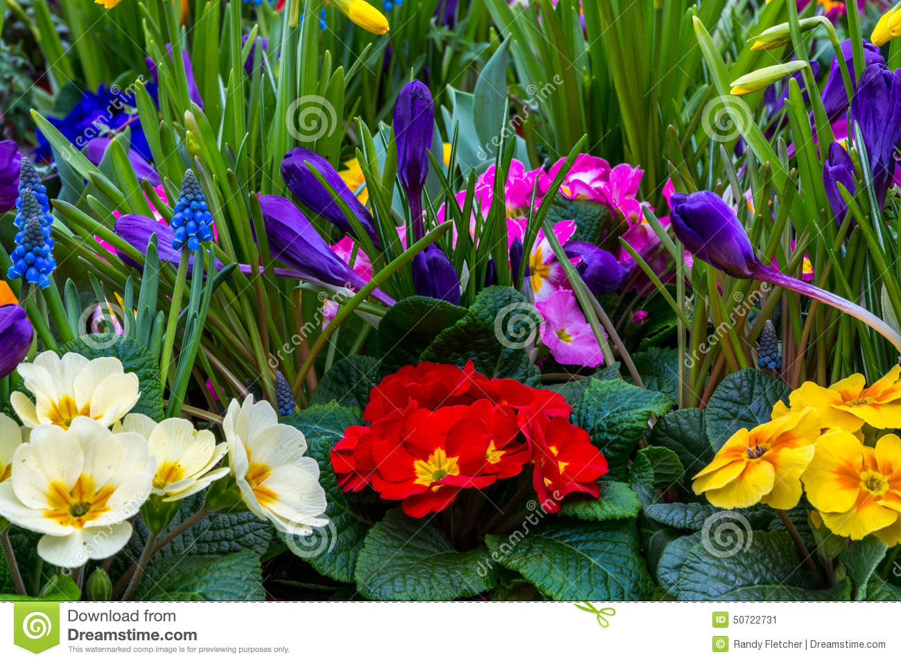Spring garden flowers stock image. Image of color, flowering - 50722731