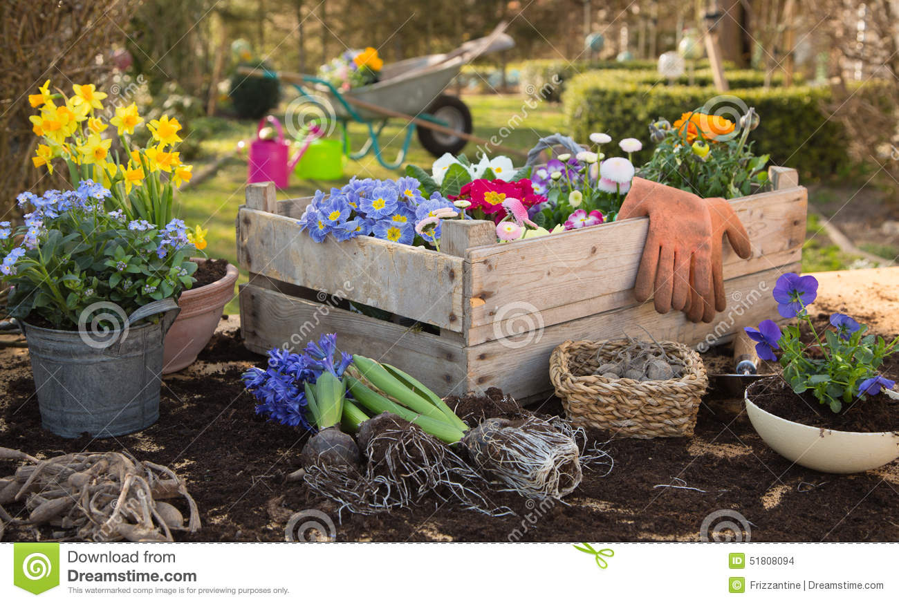 Spring: Gardening in autumn with flowers of primula, hyacinth an