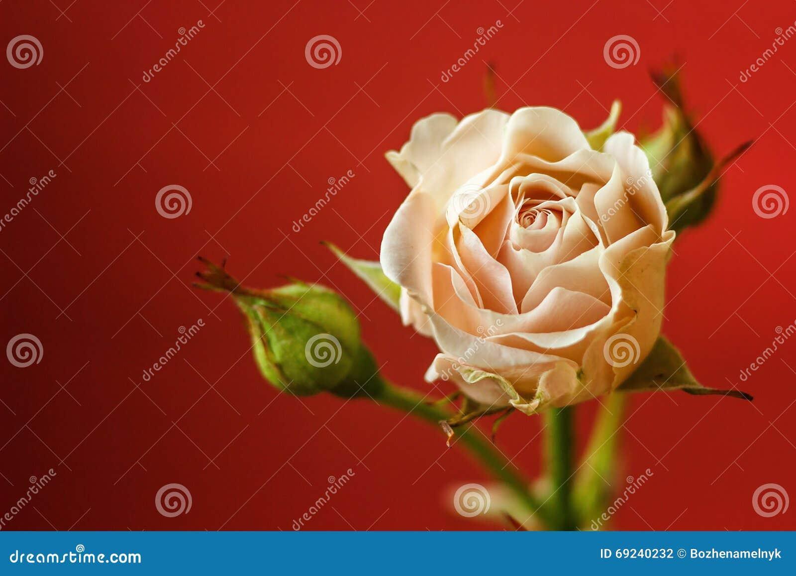 Spring gränsar bakgrund med rosa färgblomningen vektor för detaljerad teckning för bakgrund blom- Selektivt fokusera placera text