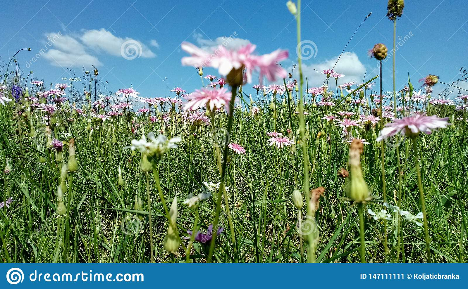 Spring grass background with flowers and grass.