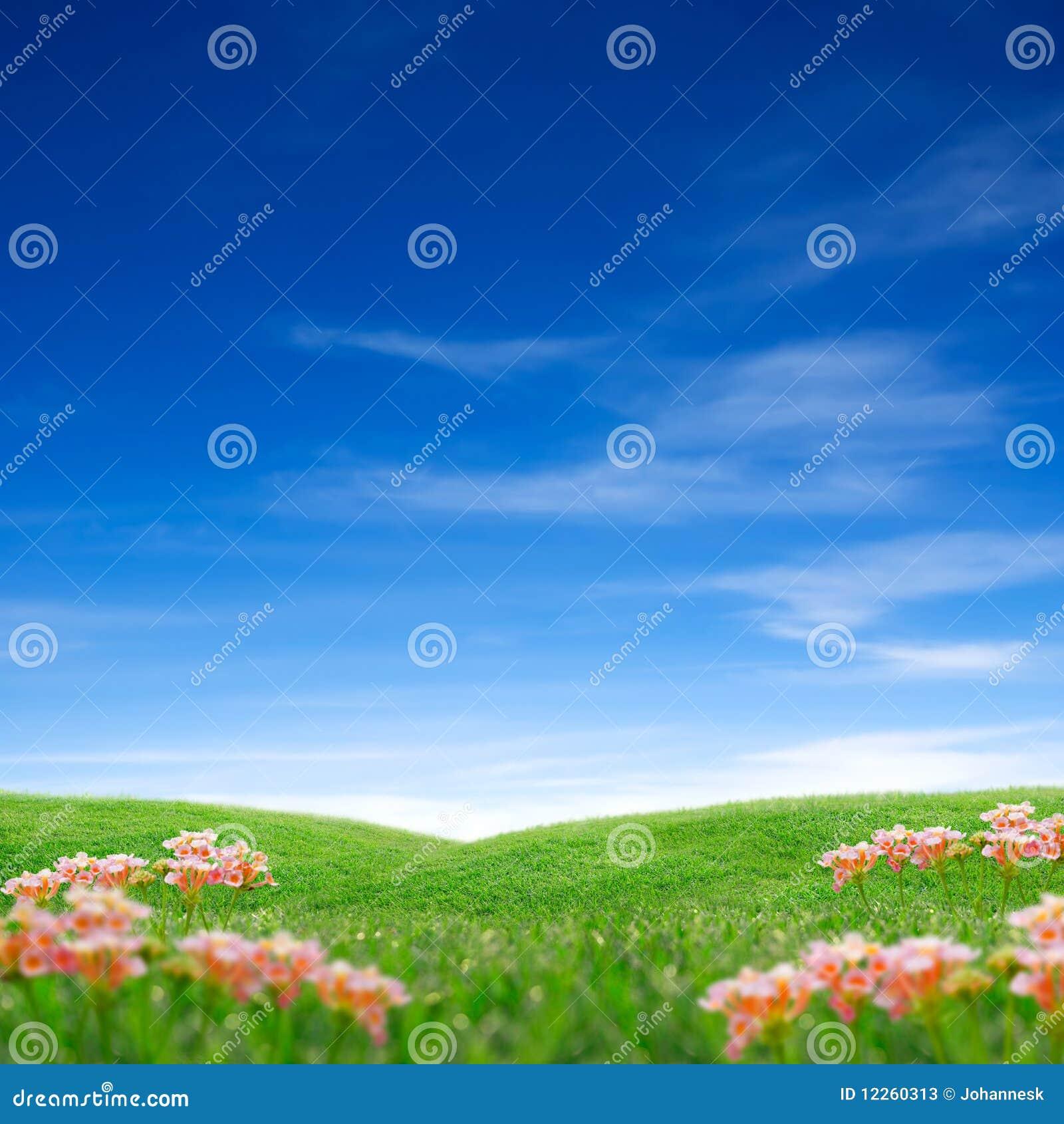 Spring grass & sky