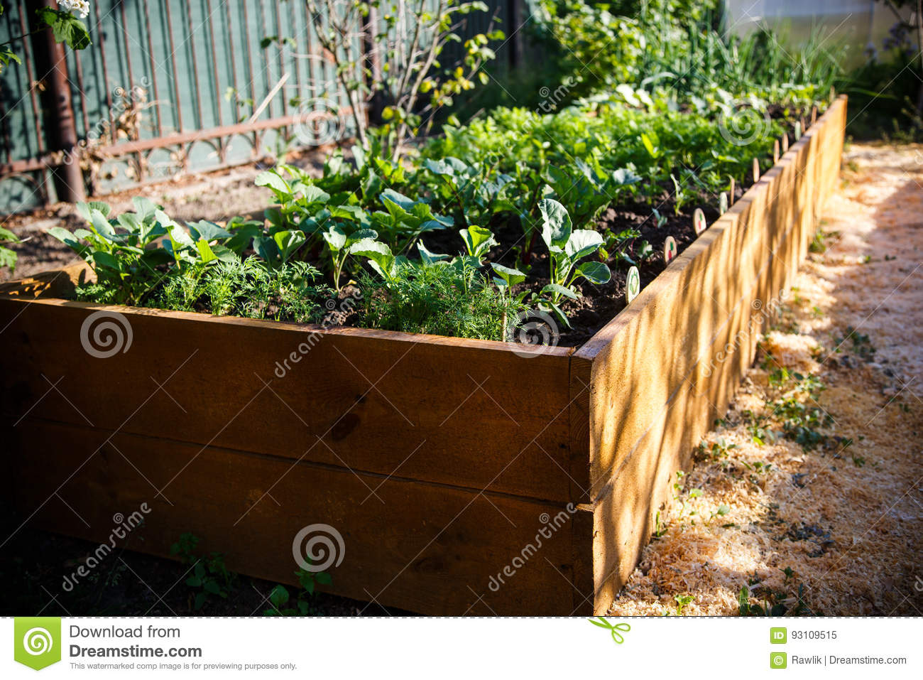 Spring Green Garden In A Wooden Box Stock Image - Image of growing ...