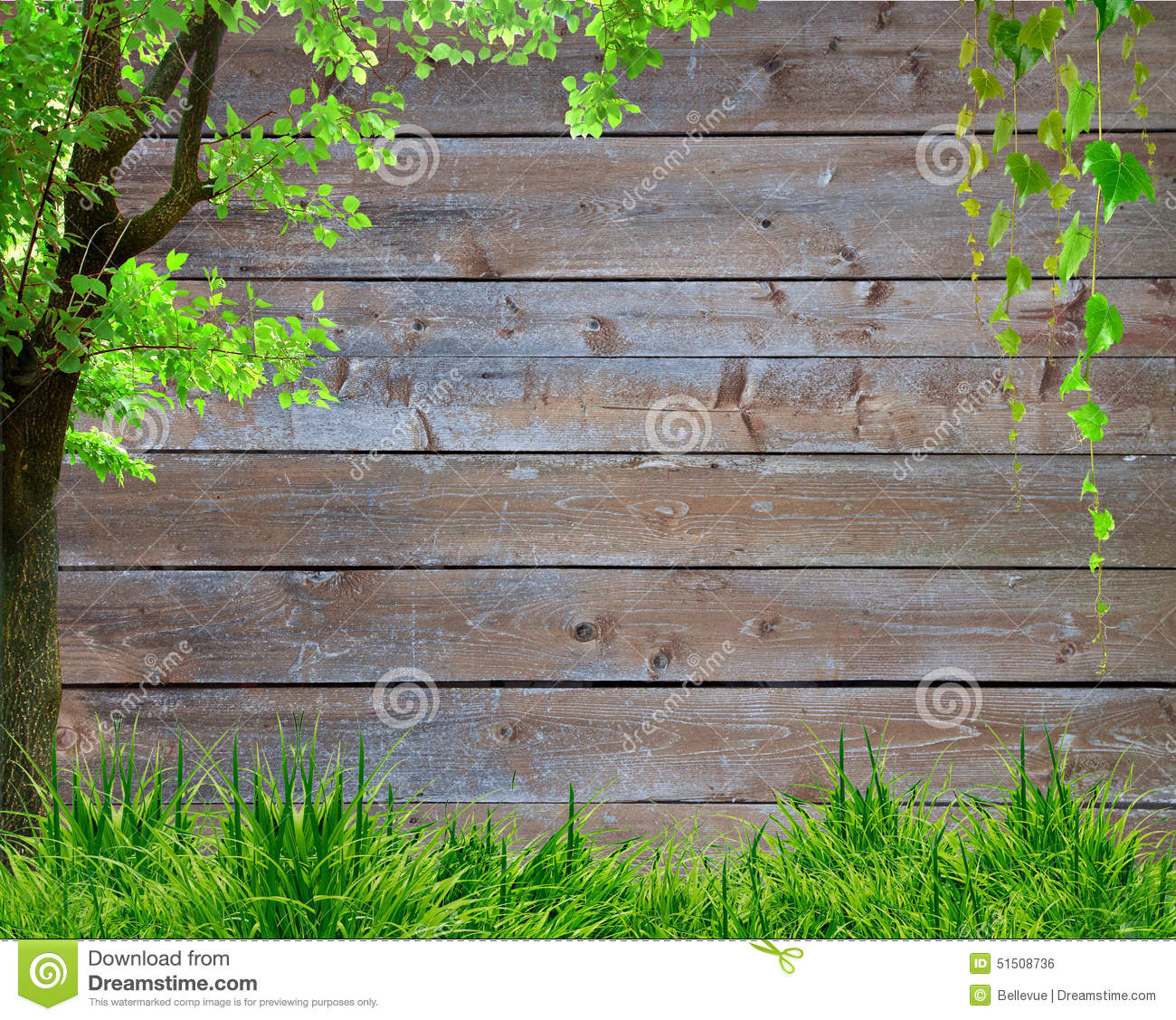 Spring green grass and leaf plant over wood fence background