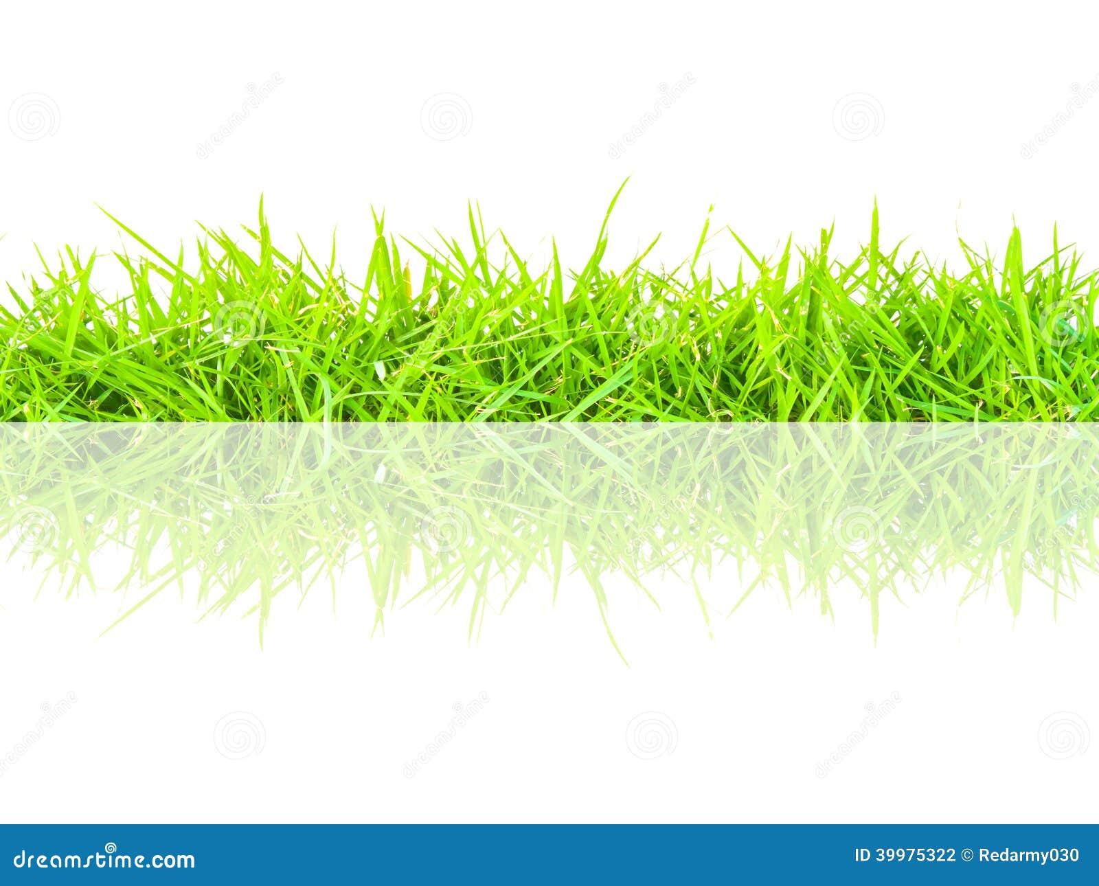 Spring green grass seamless border stock photo image for Grass border