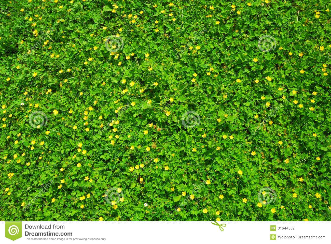 Spring Green Grass Texture With Flowers Stock Photo 31644369 Megapixl