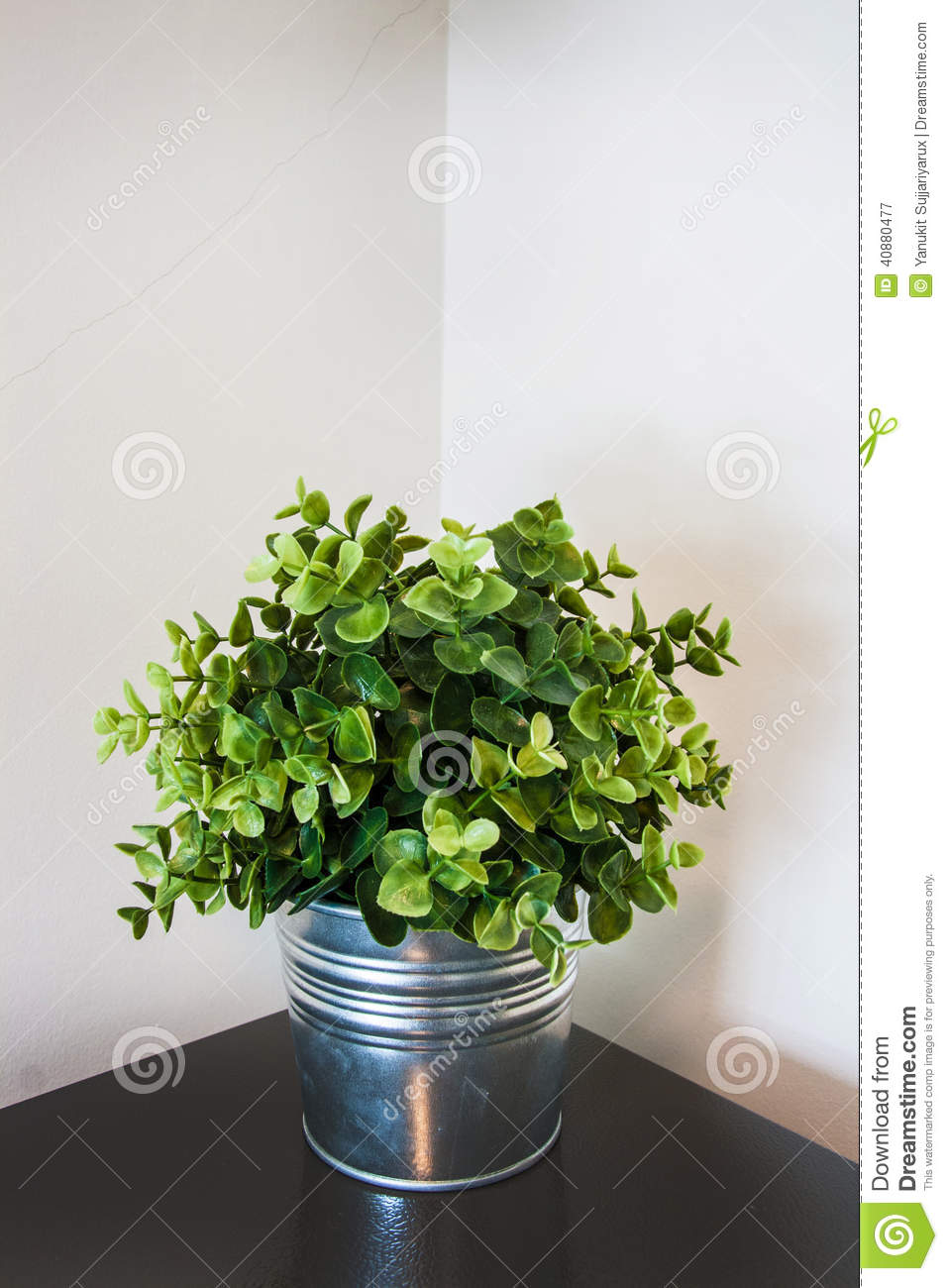 Spring green home plant in a metal pot on a corner stock for Green floor plant