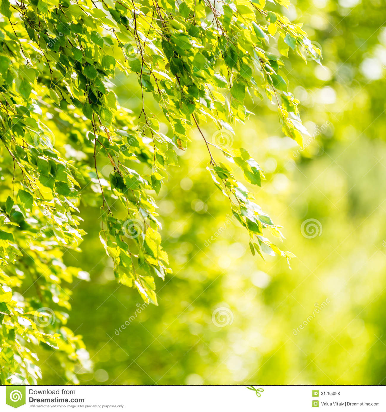Spring Green Leaves Of Birch Tree Stock Photo - Image ...