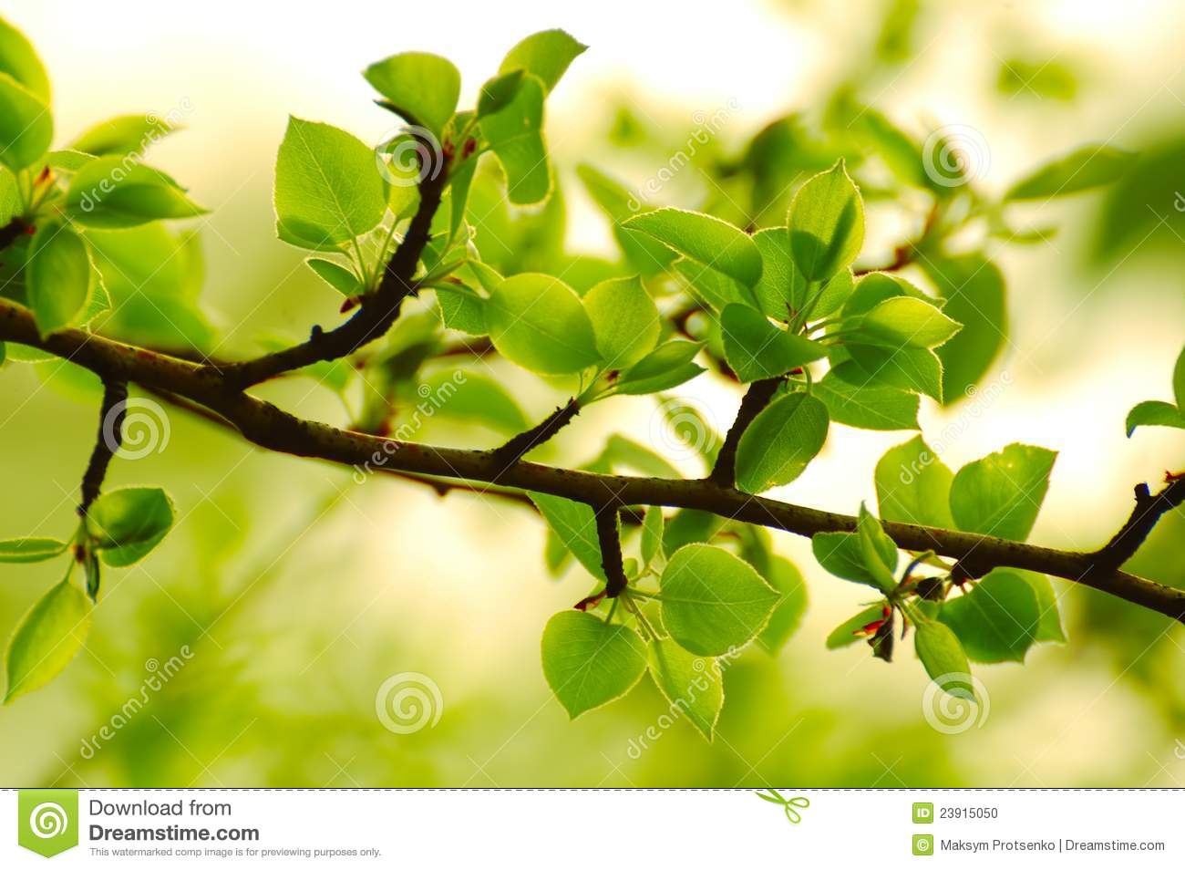 Spring Green Leaves In Bright Sunlight Stock Photo - Image ...