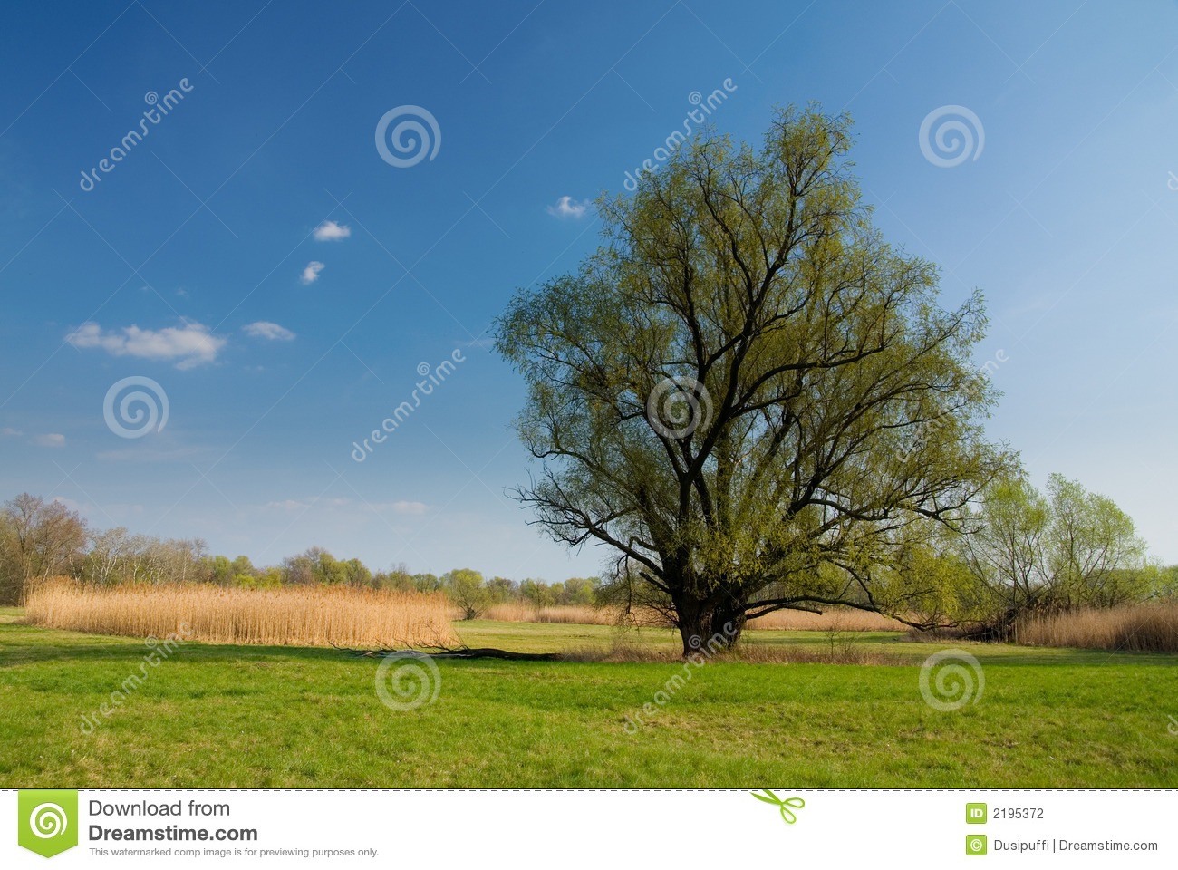 Spring landscape  green  grass  trees  blue cloudy sky  cane  Spring Landscape Photography