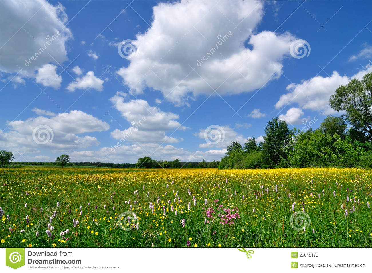 Spring landscape - meadow full of flowers and blue sky Spring Landscape Photography