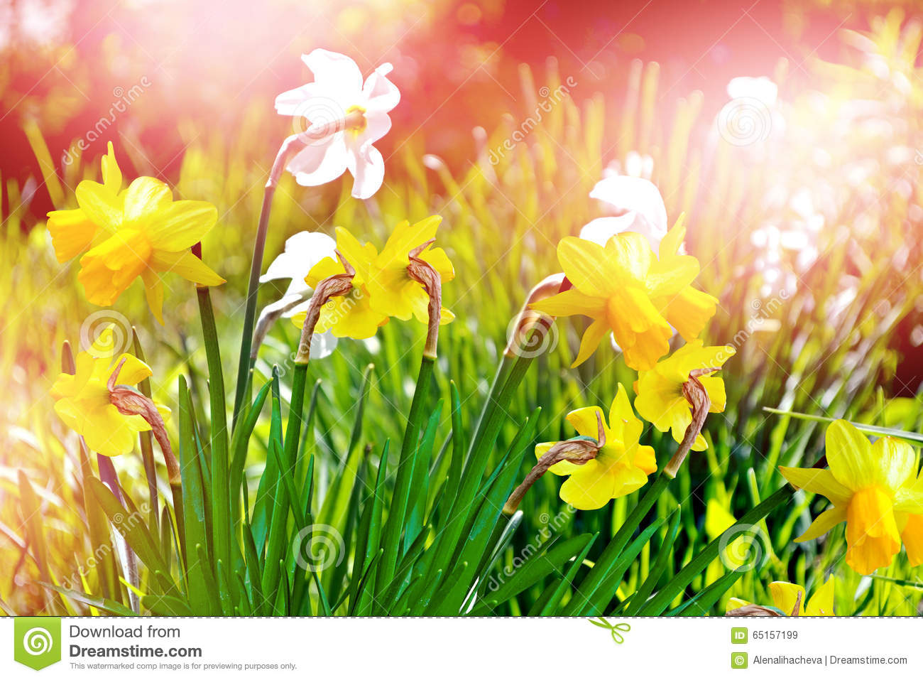 Spring landscape beautiful spring flowers daffodils stock image spring landscape beautiful spring flowers daffodils mightylinksfo
